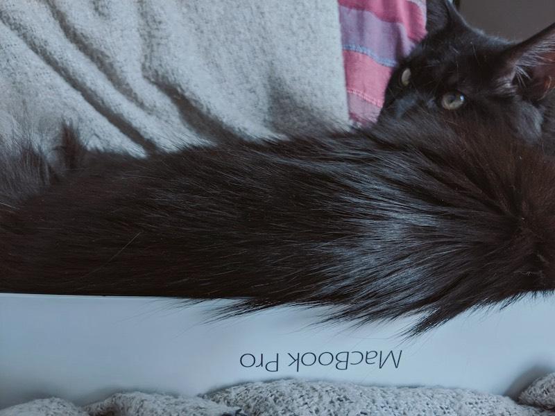 A Macbook Pro cardboard box with a big black cat inside.